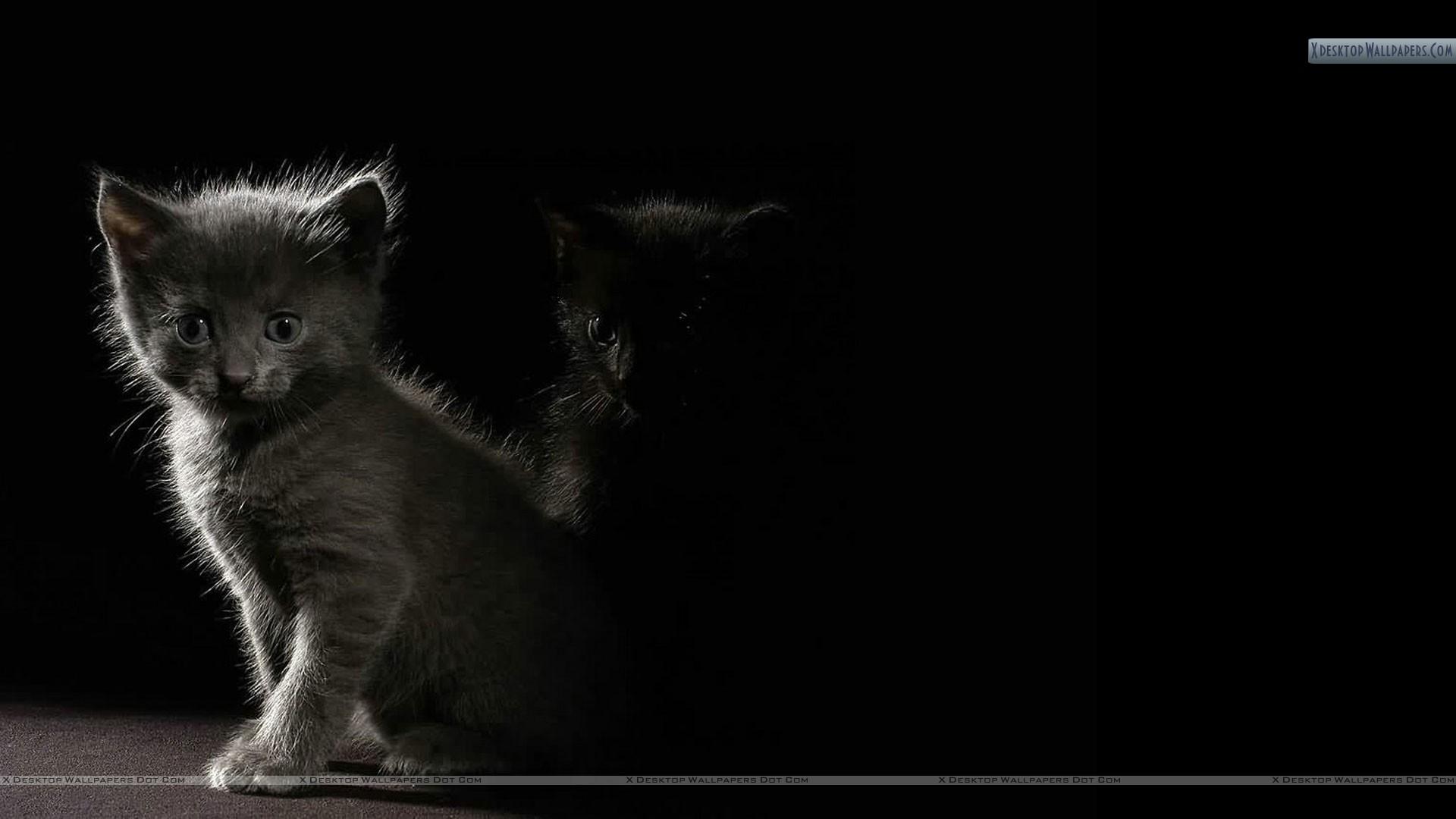Cat In Dark Shadow Wallpaper 1920x1080