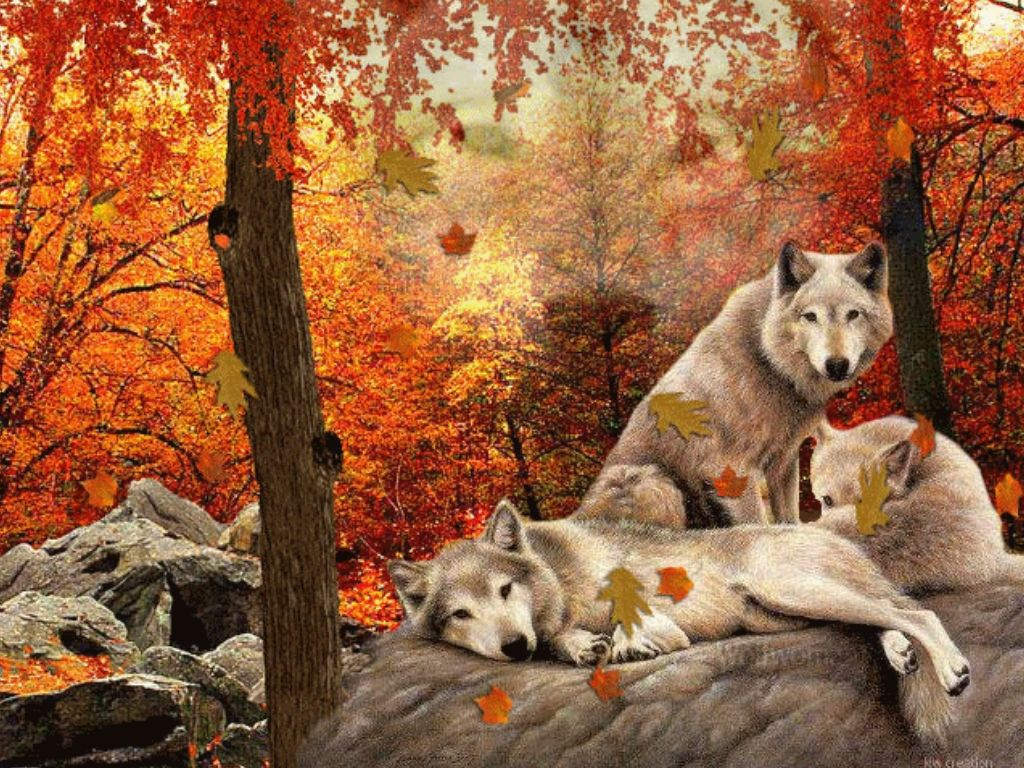 family of wolves animals autumn colours dogs family leafs falling 1024x768