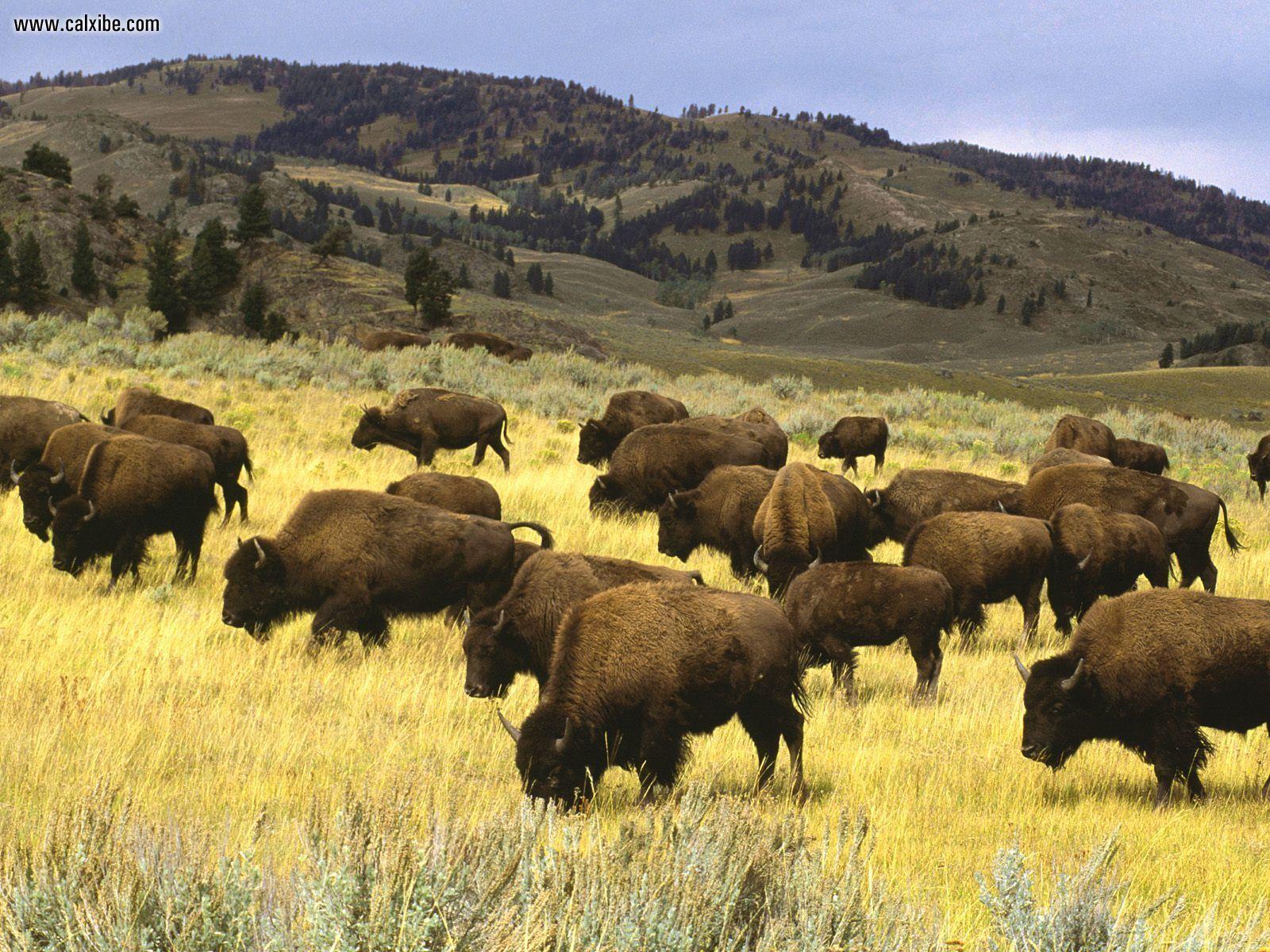 Yellowstone National Park A Hotspot Amongst The Tourists 1600x1200