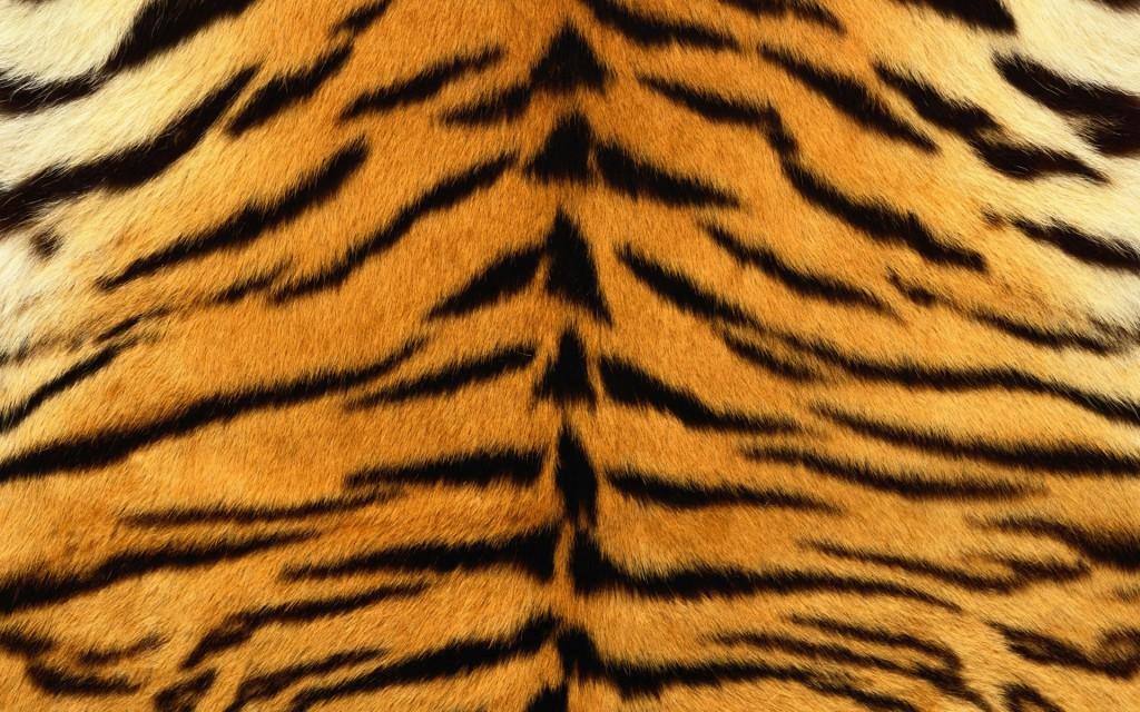 Textura Piel de Tigre   Wallpapers 1024x640