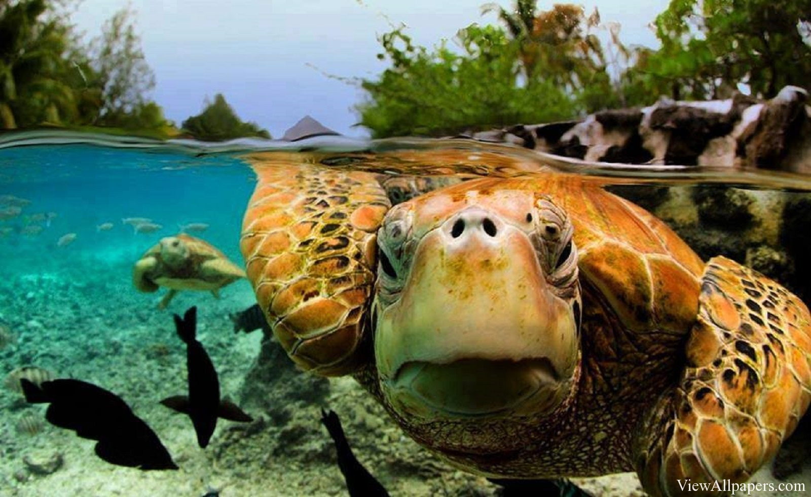 Animal Planet Green Sea Turtle High Resolution download Animal 1600x980