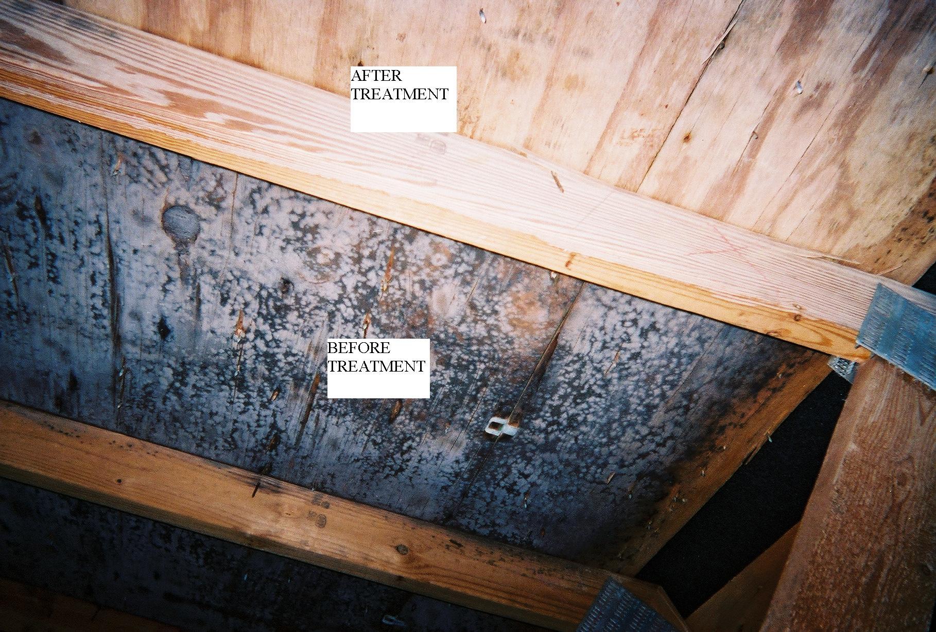 Mold In Bathroom Wall Health black mold in bathroom health hazard