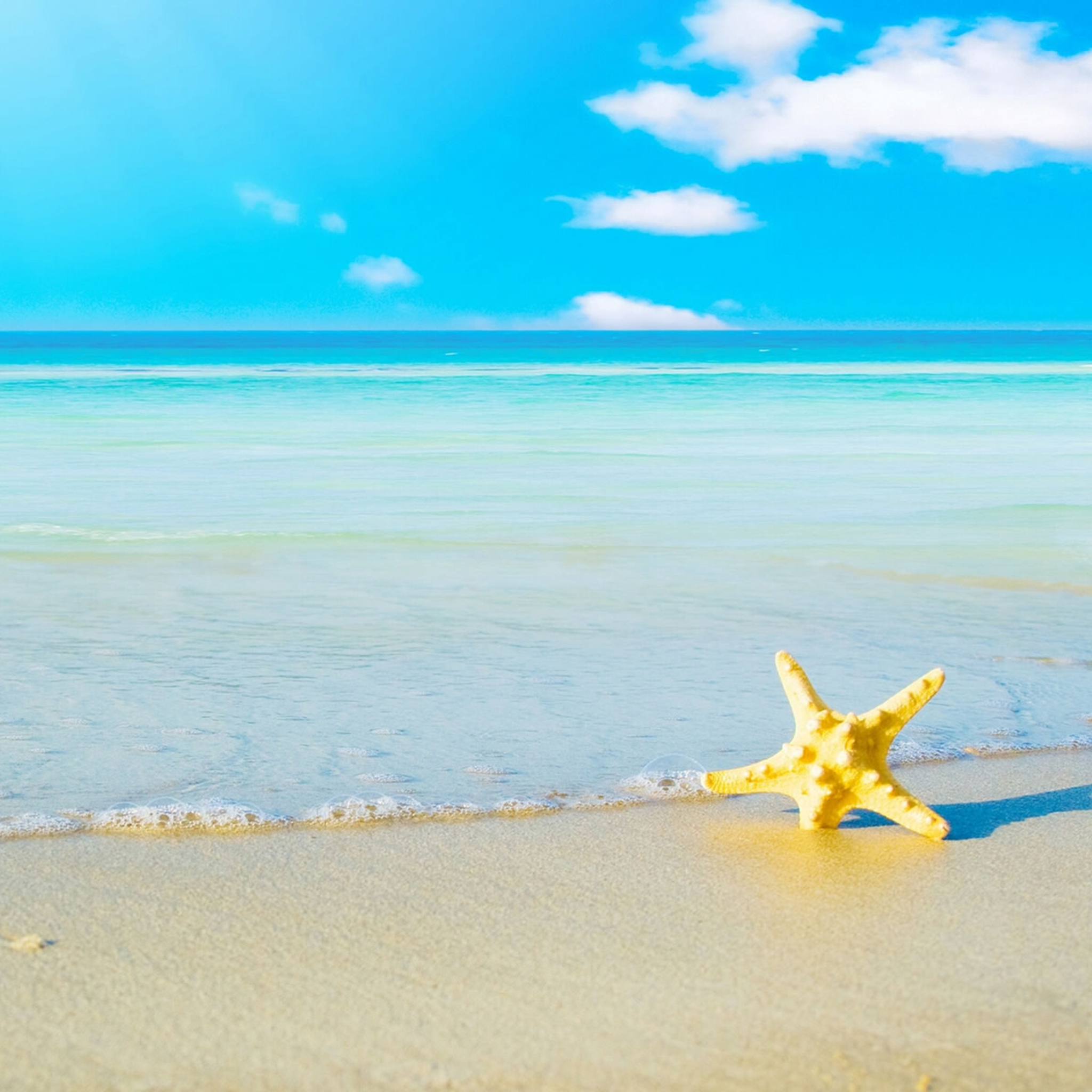 HD Wallpaper Beach and a Starfish   iPad Help For iPad iPad Air iPad 2048x2048