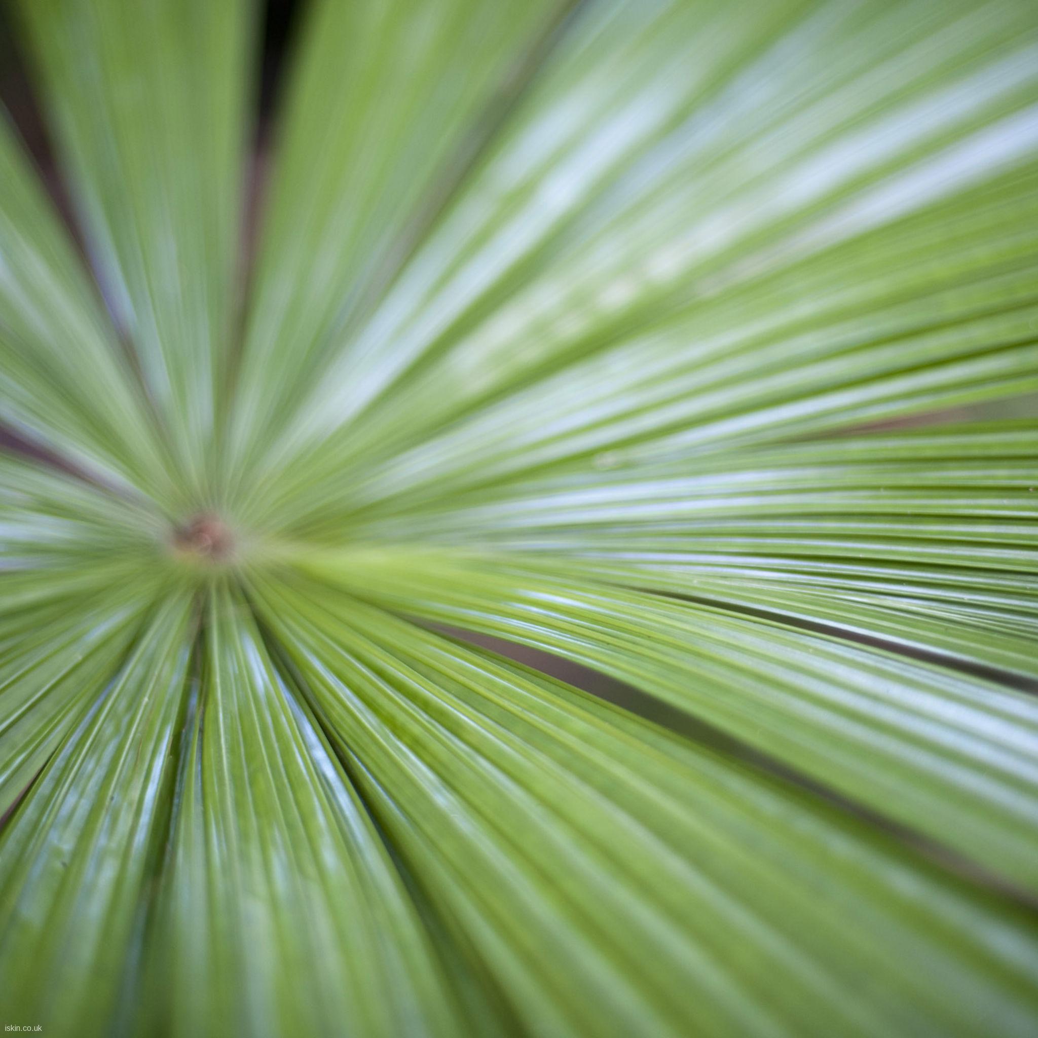 fan palm leaf Desktop Wallpaper iskincouk 2048x2048