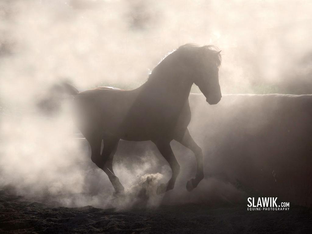 Slawik horse wallpapers   Horses Wallpaper 6070970 1024x768