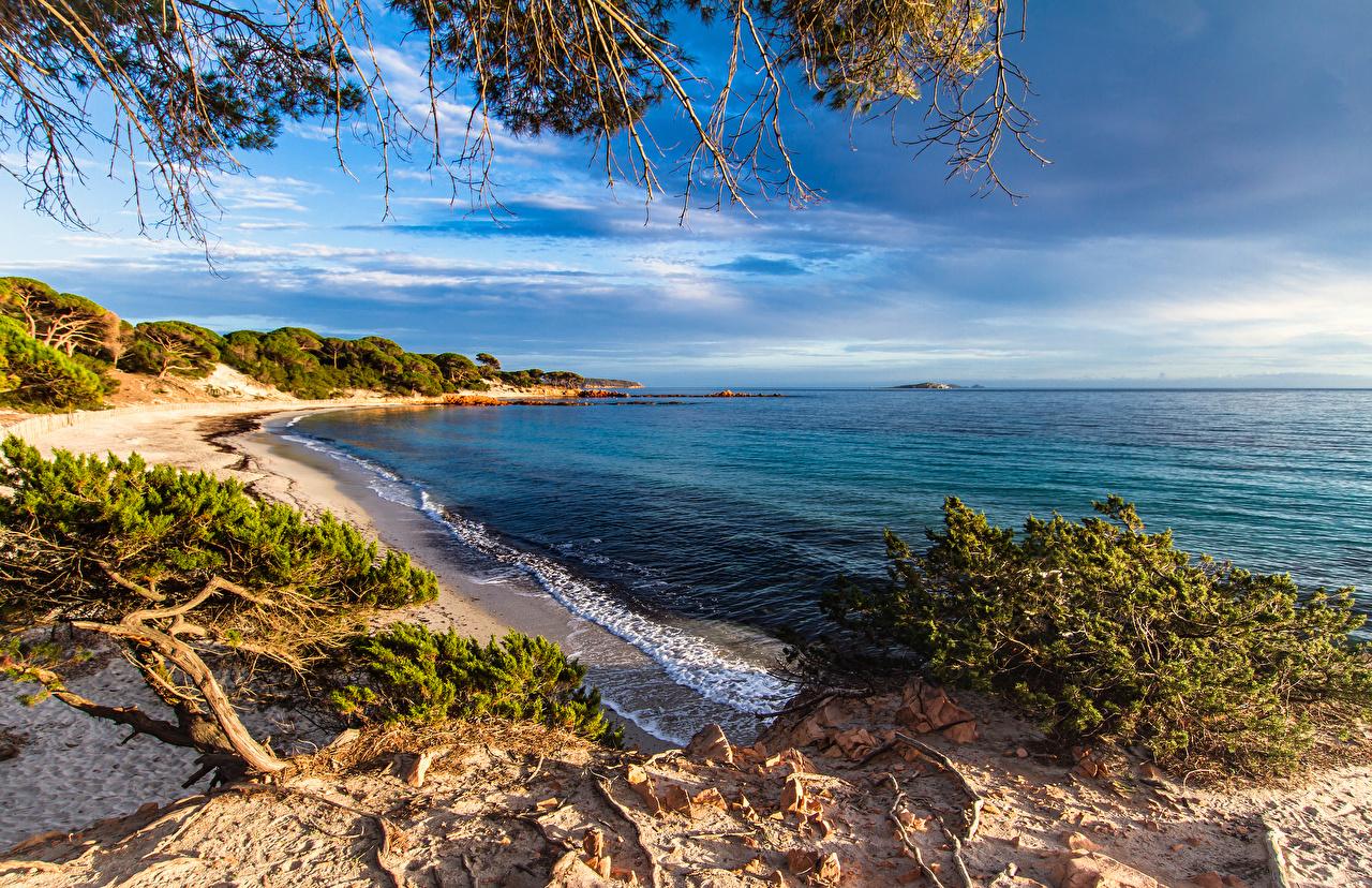 Desktop Wallpapers France Corsica Nature Waves Coast Shrubs 1280x828