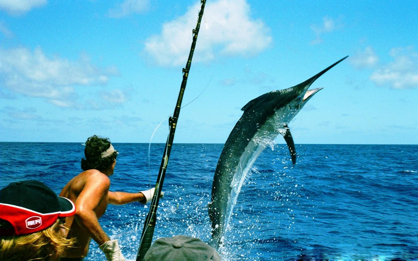 Marlin Fishing Wallpaper | www.imgkid.com - The Image Kid ...