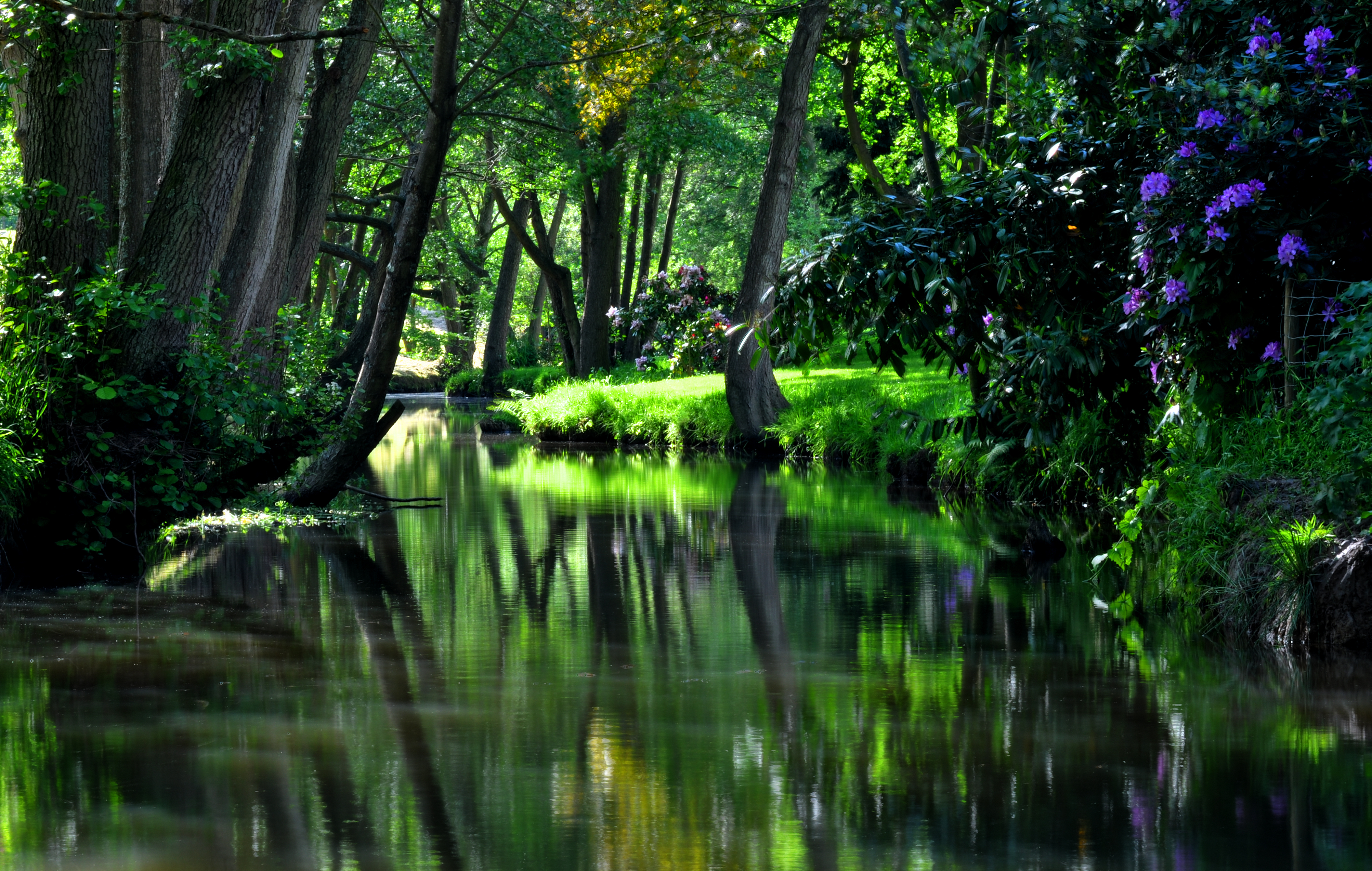 Free Download 4k Wallpaper Nature Water Flowers Trees Nature Grass