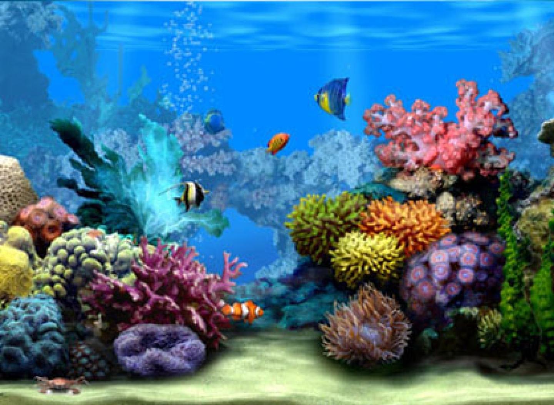 Wallpapers Moving Coral Reef 1440x1054 pixel Popular HD Wallpaper 1440x1054