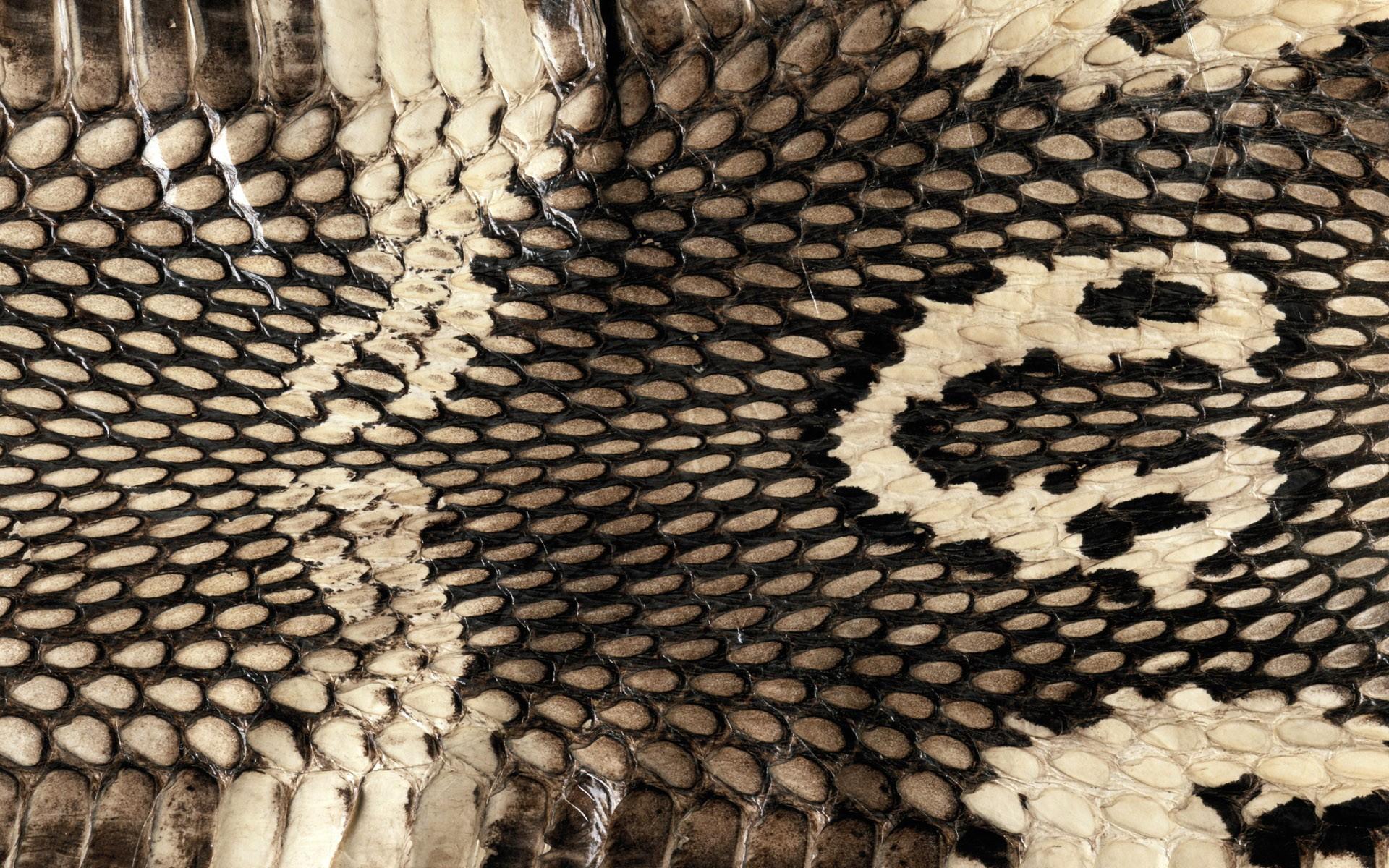 Cobra Snake Skin Wallpapers Cobra Snake Skin Myspace Backgrounds 1920x1200
