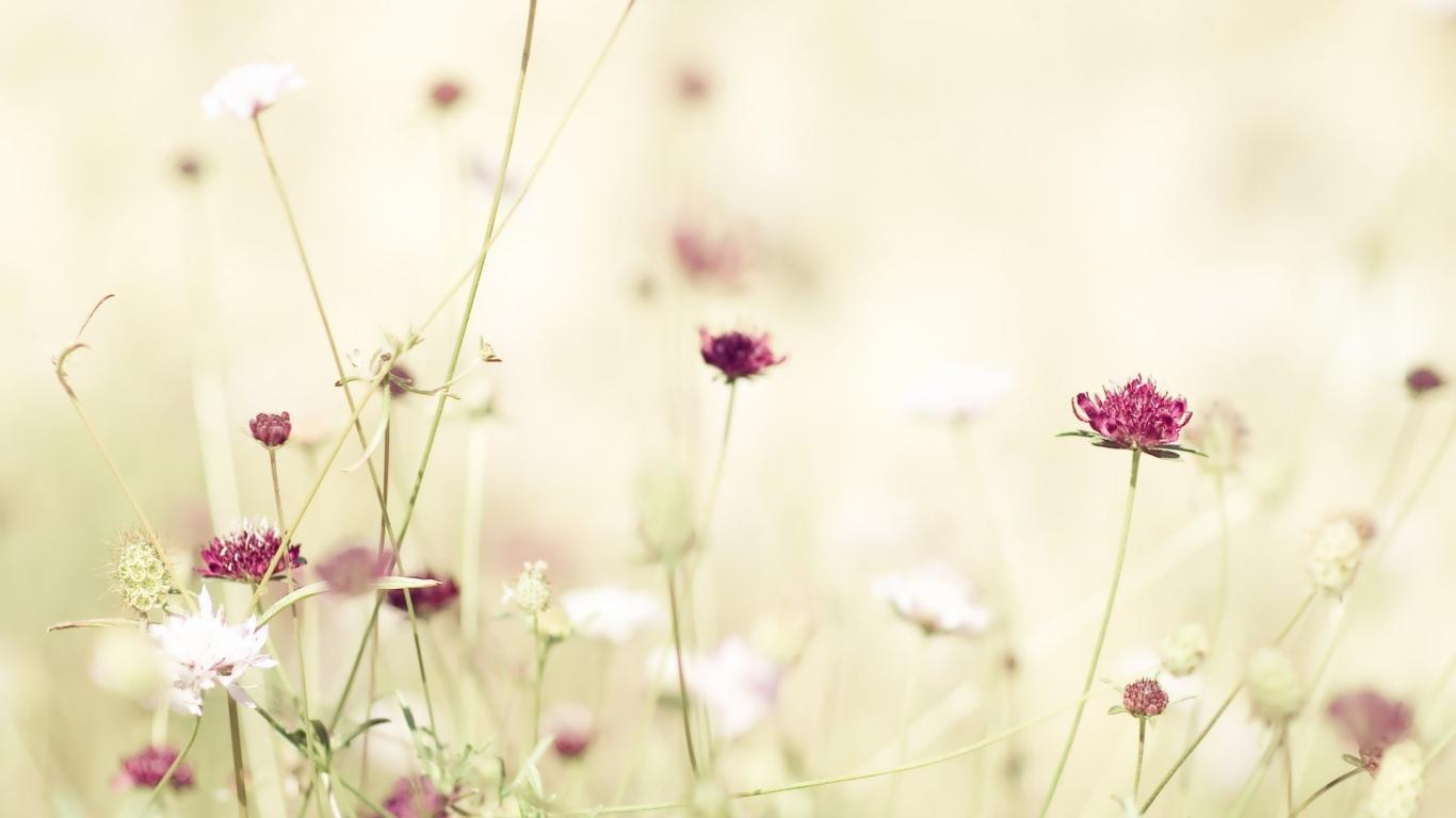 Download Wallpapers Tumblr Flowers Nature White Flower Hd Images 1366x768
