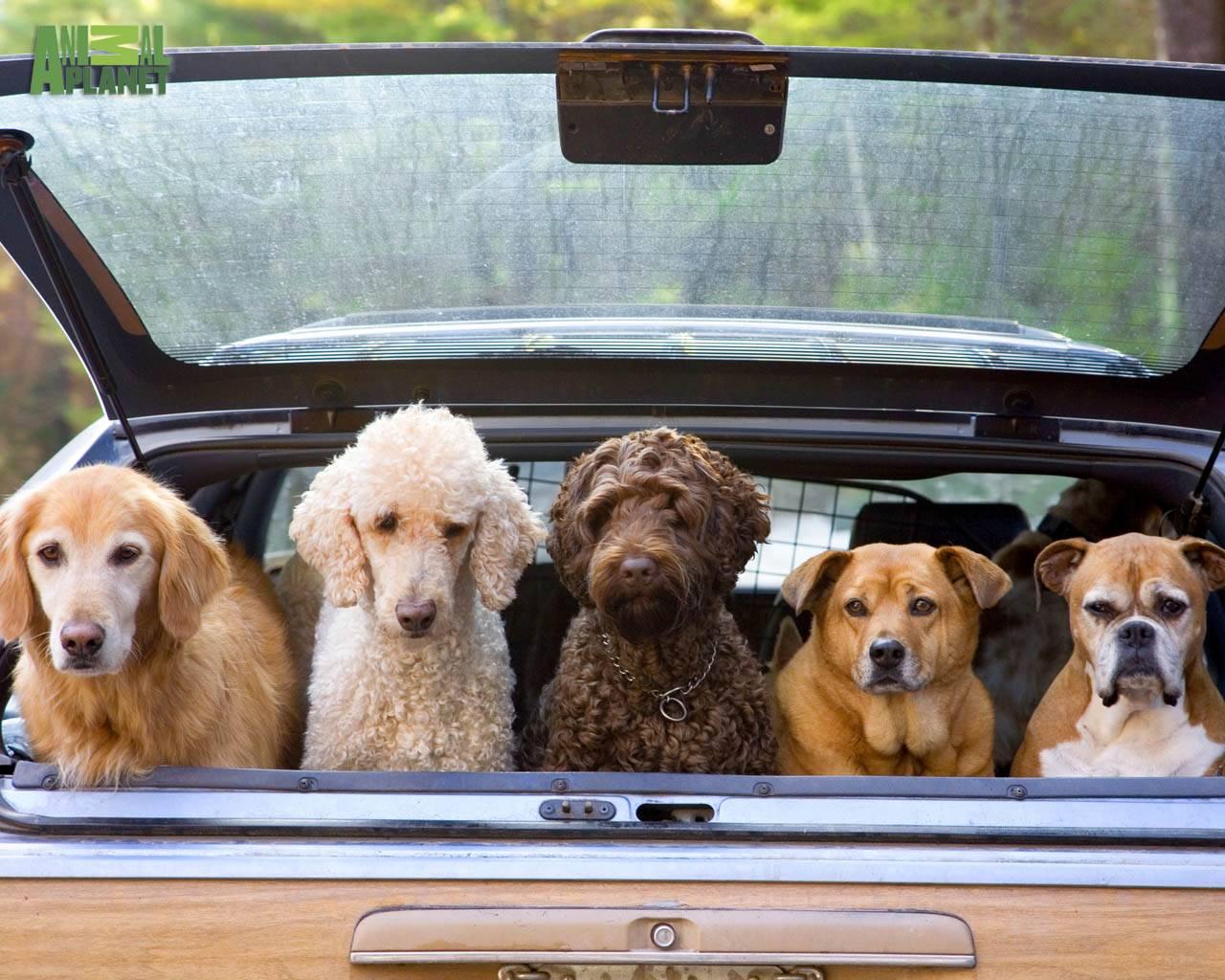 48769 dogs free dogs wallpaperjpg 1280x1024
