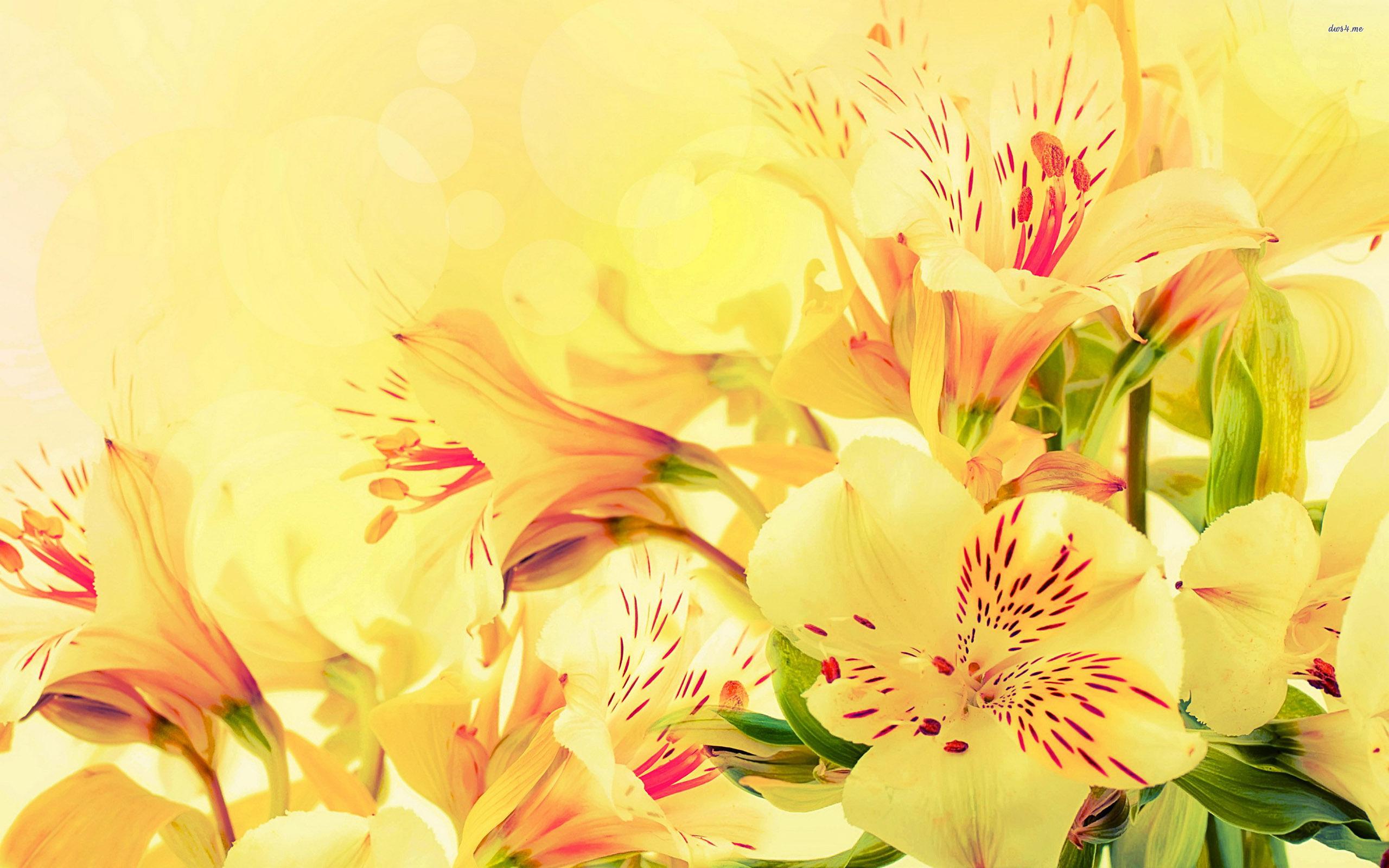 Peruvian Lilies wallpapers HD   392215 2560x1600