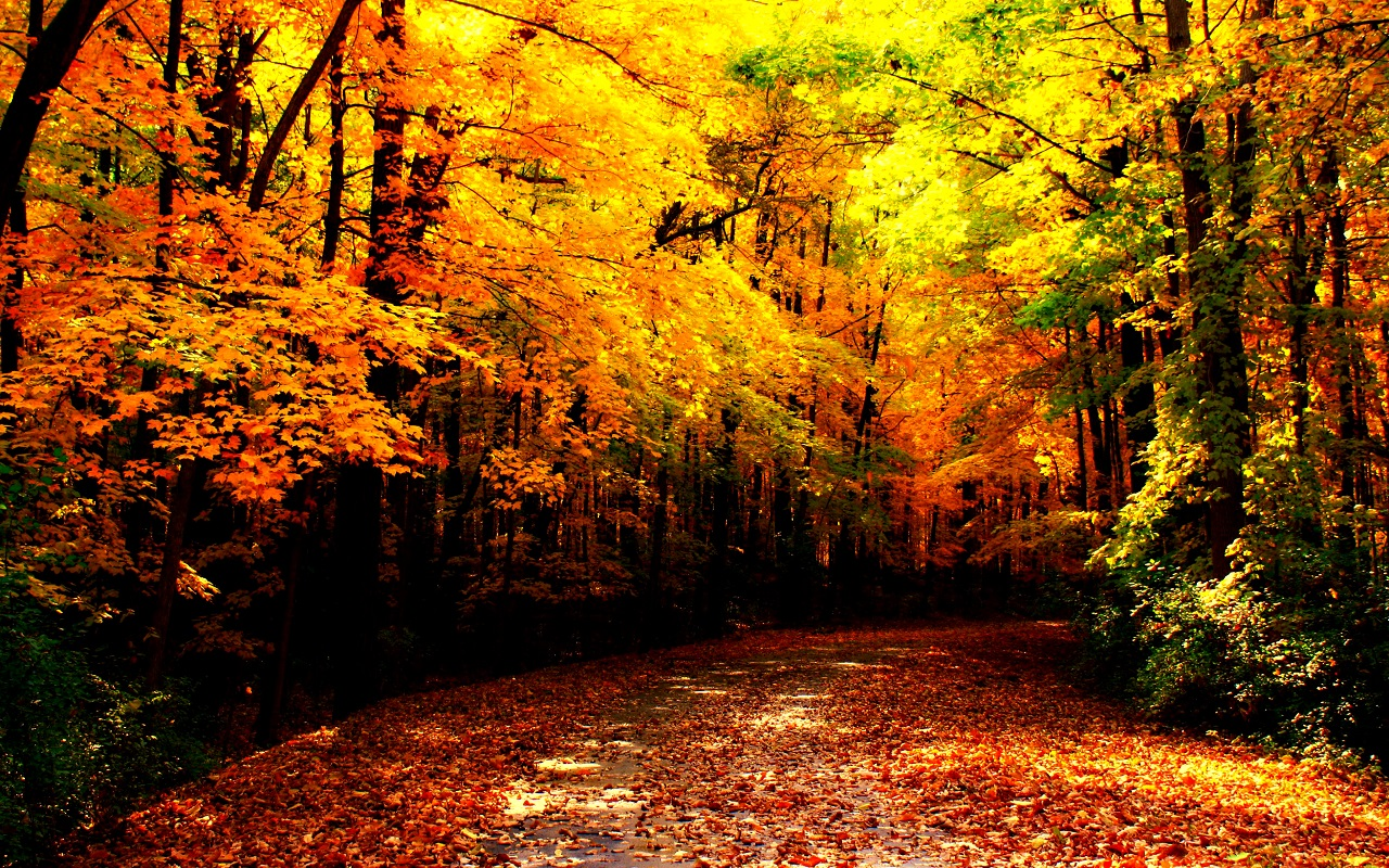 Autumn Wallpaper   Autumn Wallpaper 35867684 1280x800