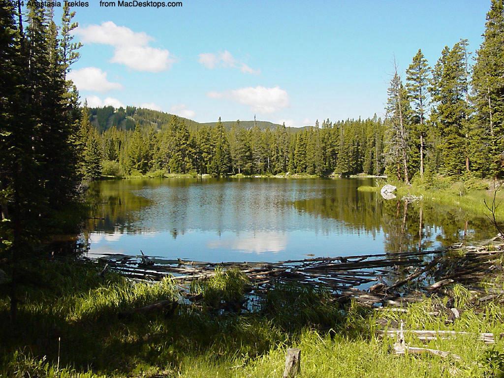 Forest Lake Wallpaper - WallpaperSafari