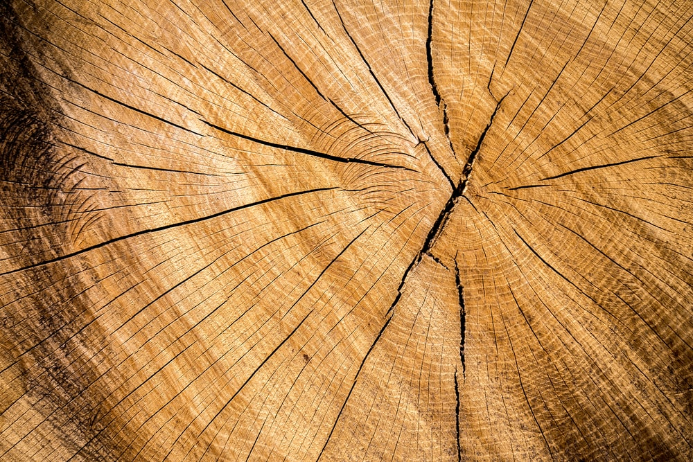 900 Wood Background Images Download HD Backgrounds on Unsplash 1000x667