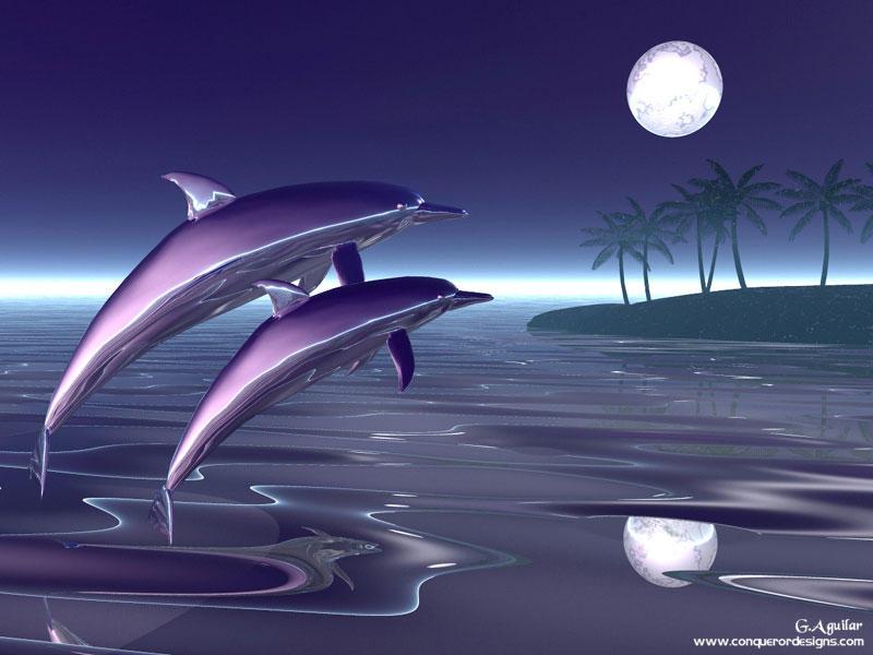 3D Dolphin 800x600
