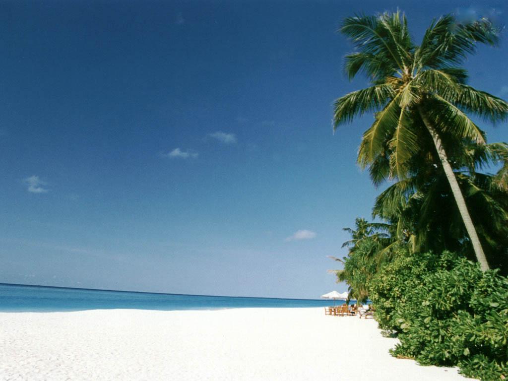 tropical beach screensavers and wallpaper - wallpapersafari