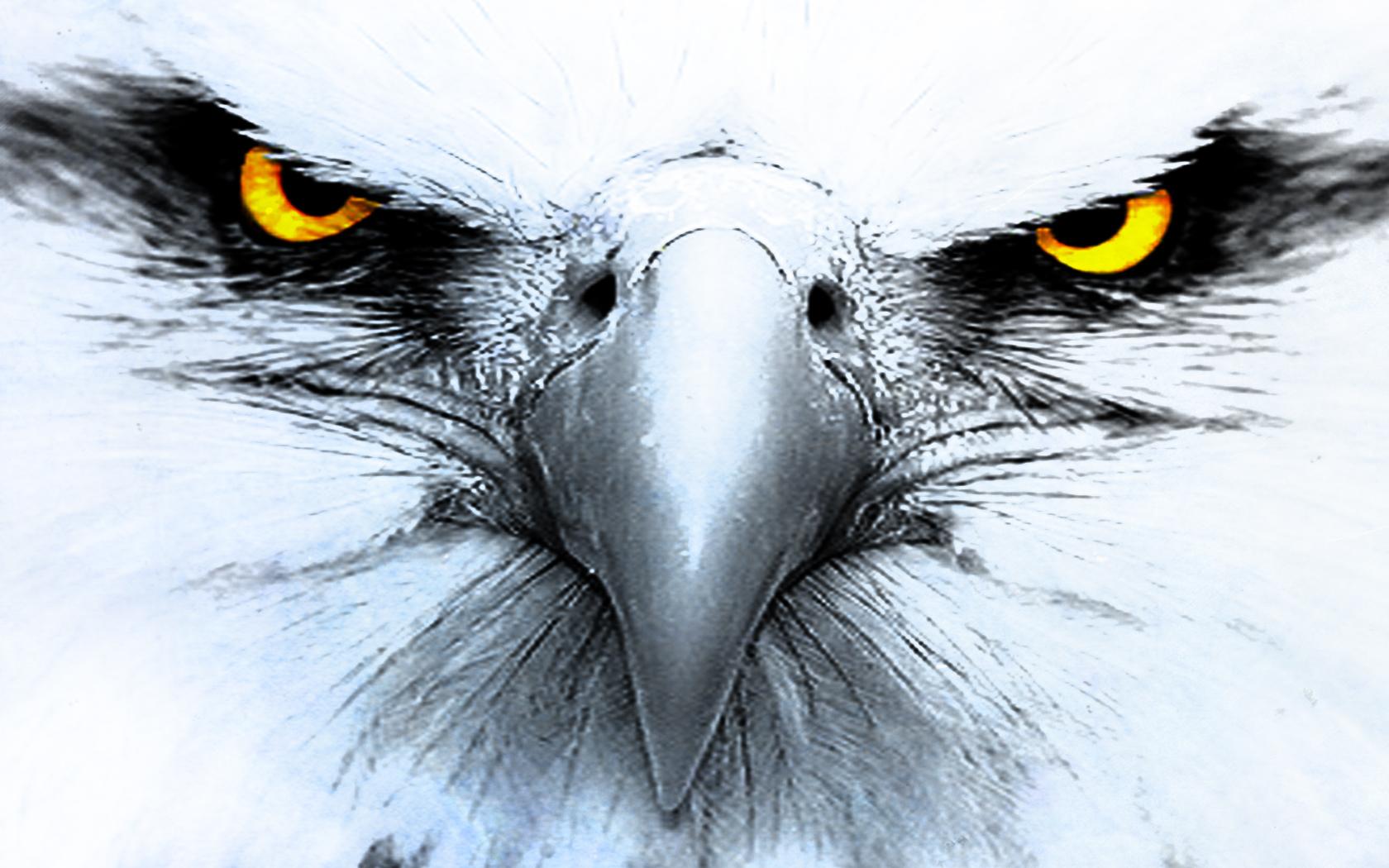 Eagle Computer Wallpapers Desktop Backgrounds 1680x1050 ID150464 1680x1050