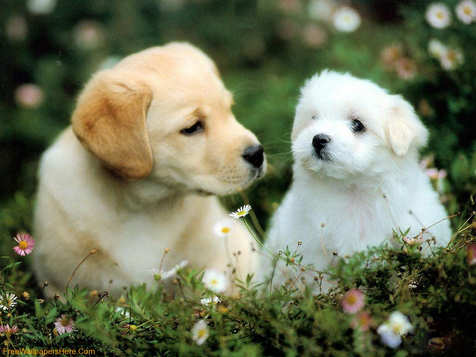 puppies wallpaper christmas puppies wallpaper cute dogs and puppies 1600x1200