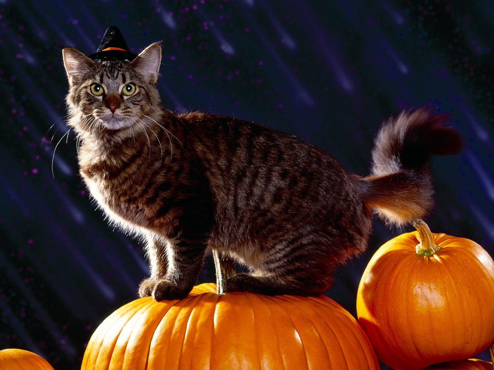 Cats Dressed For Halloween