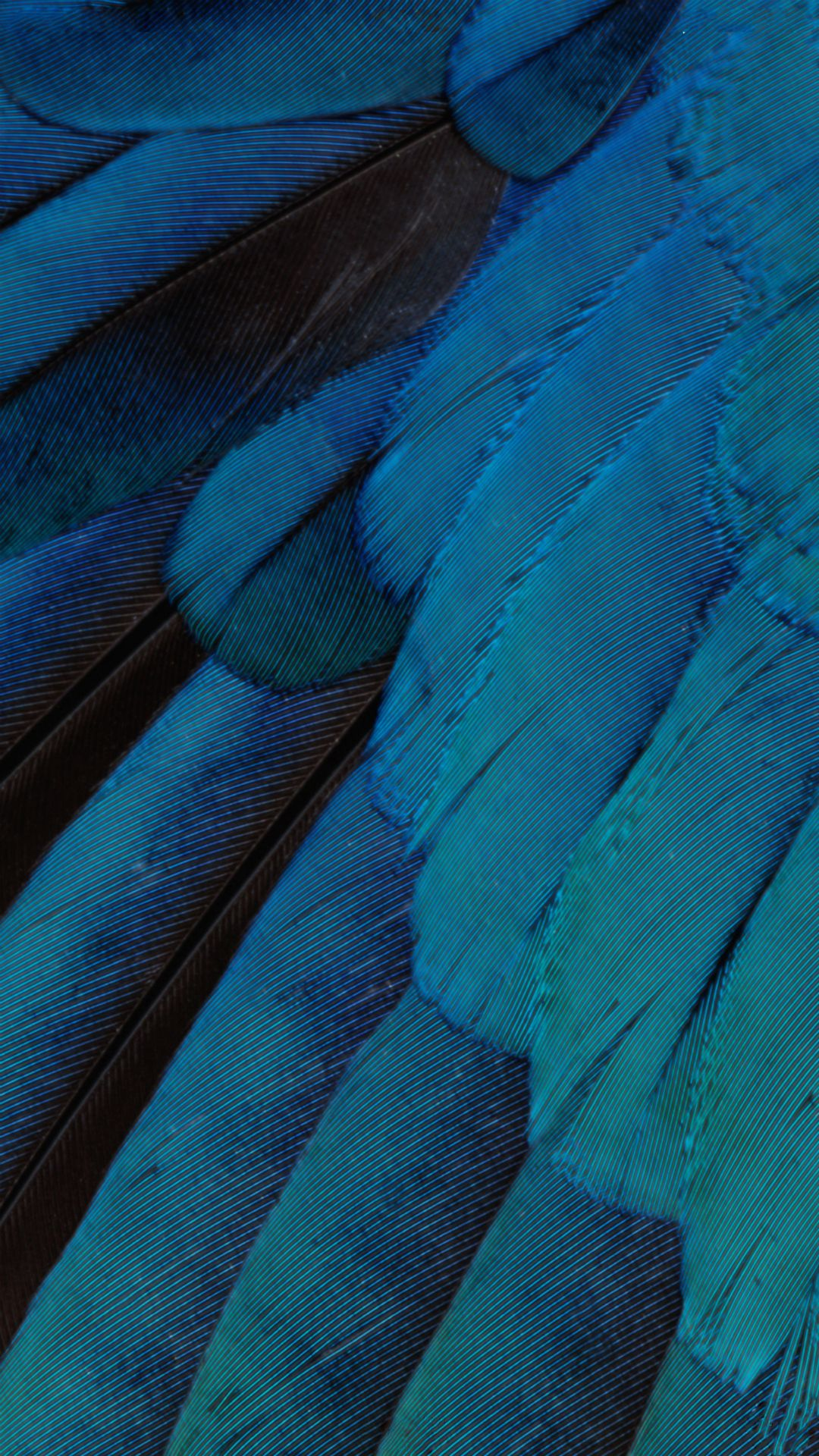 iOS9 Wallpaper Blue Feather Pattern Art iPhone 6 wallpaper 1080x1920