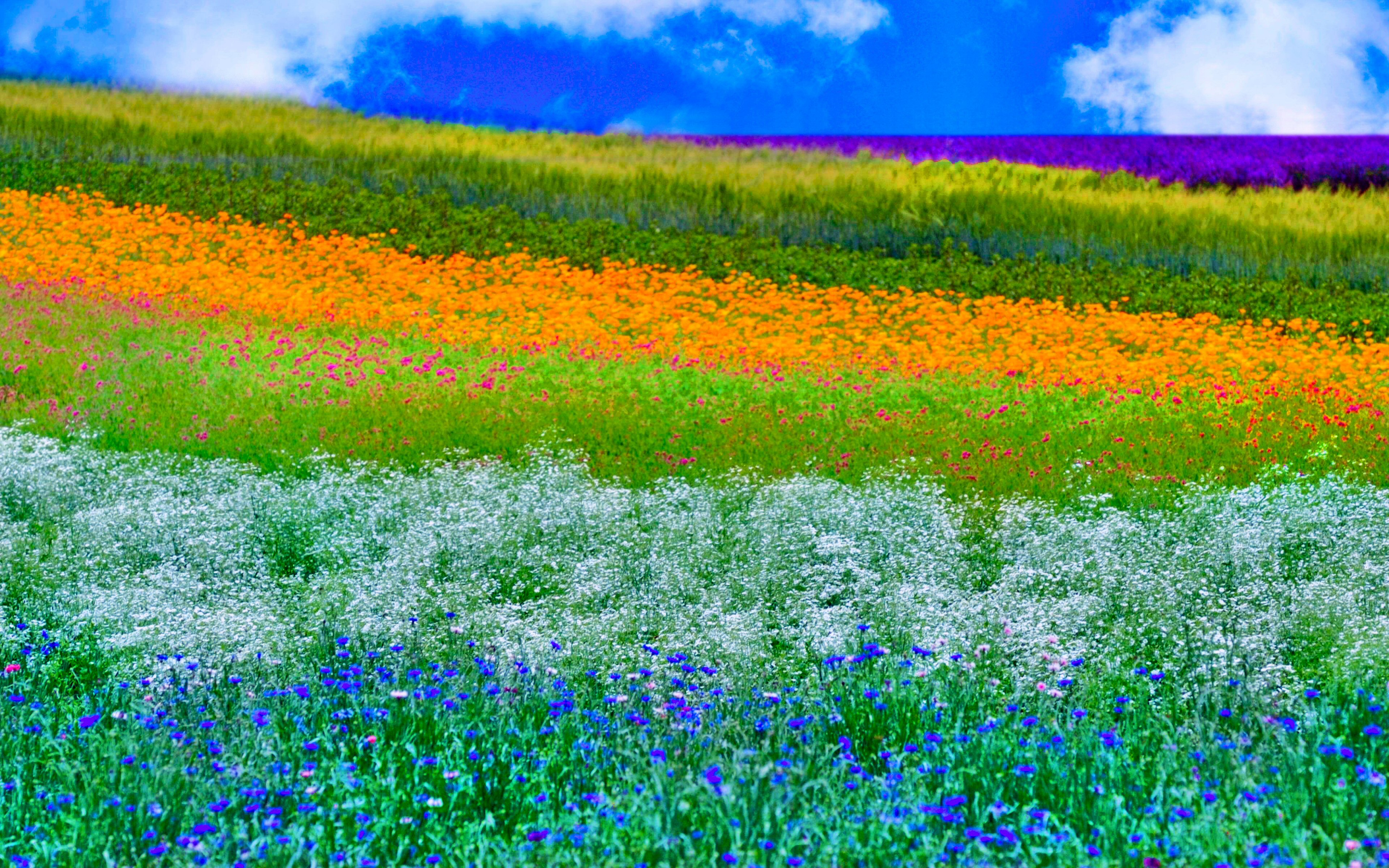 31 HD Spring Wallpapers Backgrounds Images Design 3840x2400