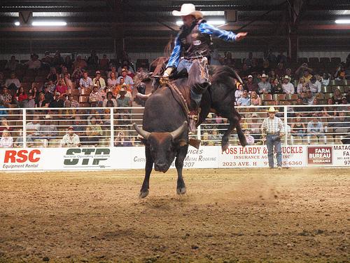 Bull Riding Wallpaper Bull blast pbr bullriding 500x375