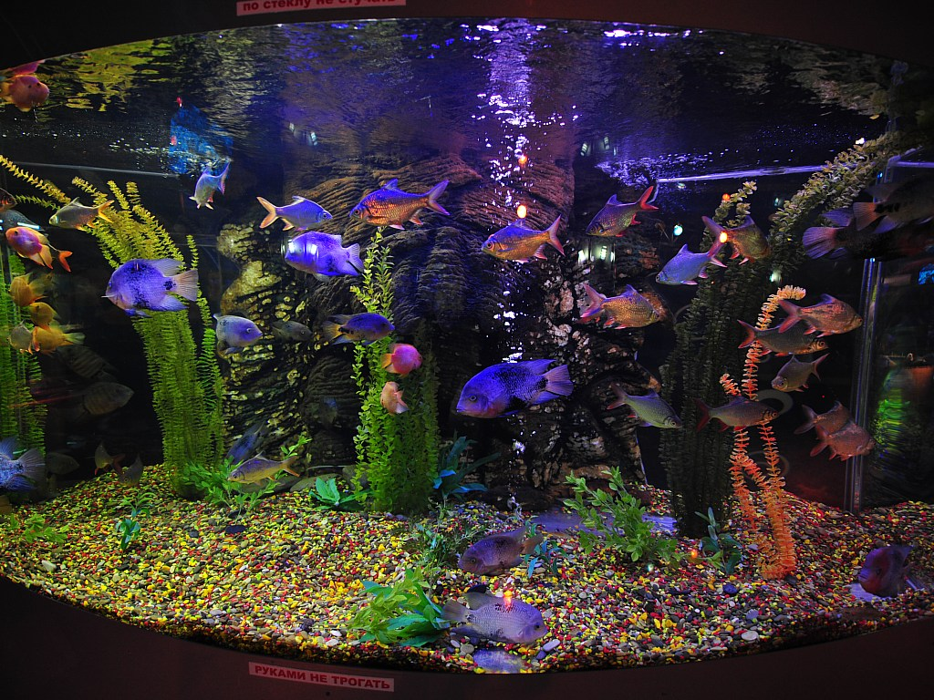 Fish tank desktop wallpaper wallpapersafari for Desktop fish tank