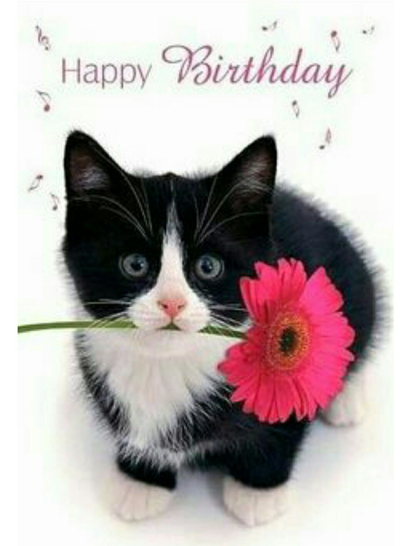 Astonishing Free Download Happy Birthday Cat Birthday Sayings Birthday Wishes Personalised Birthday Cards Epsylily Jamesorg