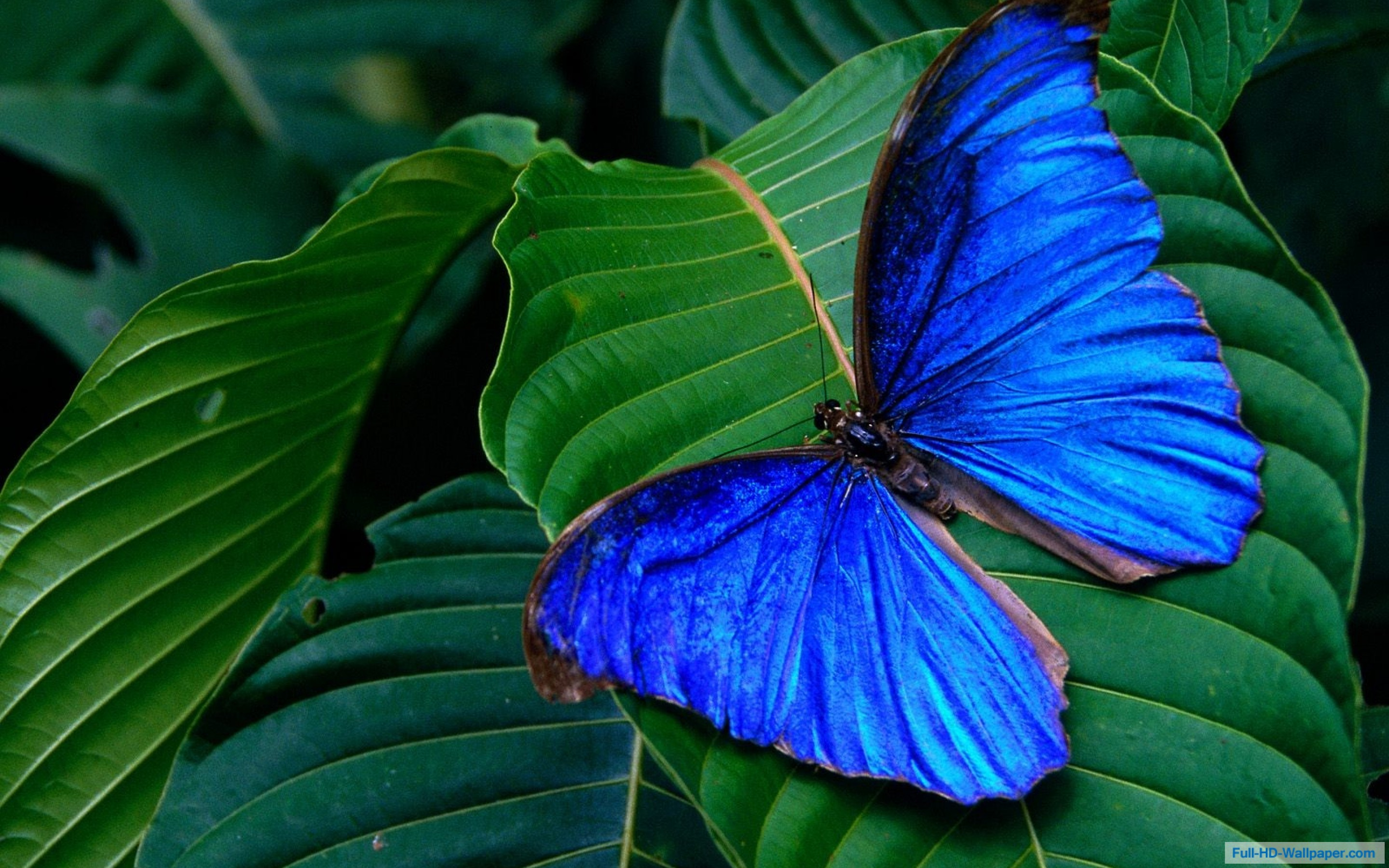 blue colorful butterfly nature hd wallpaper HD Wallpapers 2880x1800