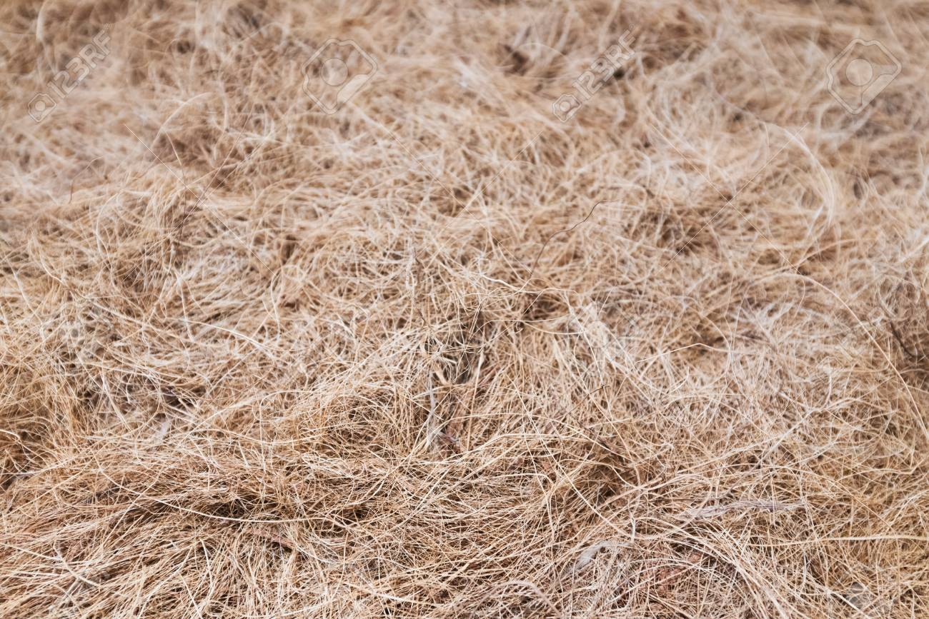 A Hay Straw Background Of Matted Dried Grass Stock Photo Picture 1300x867