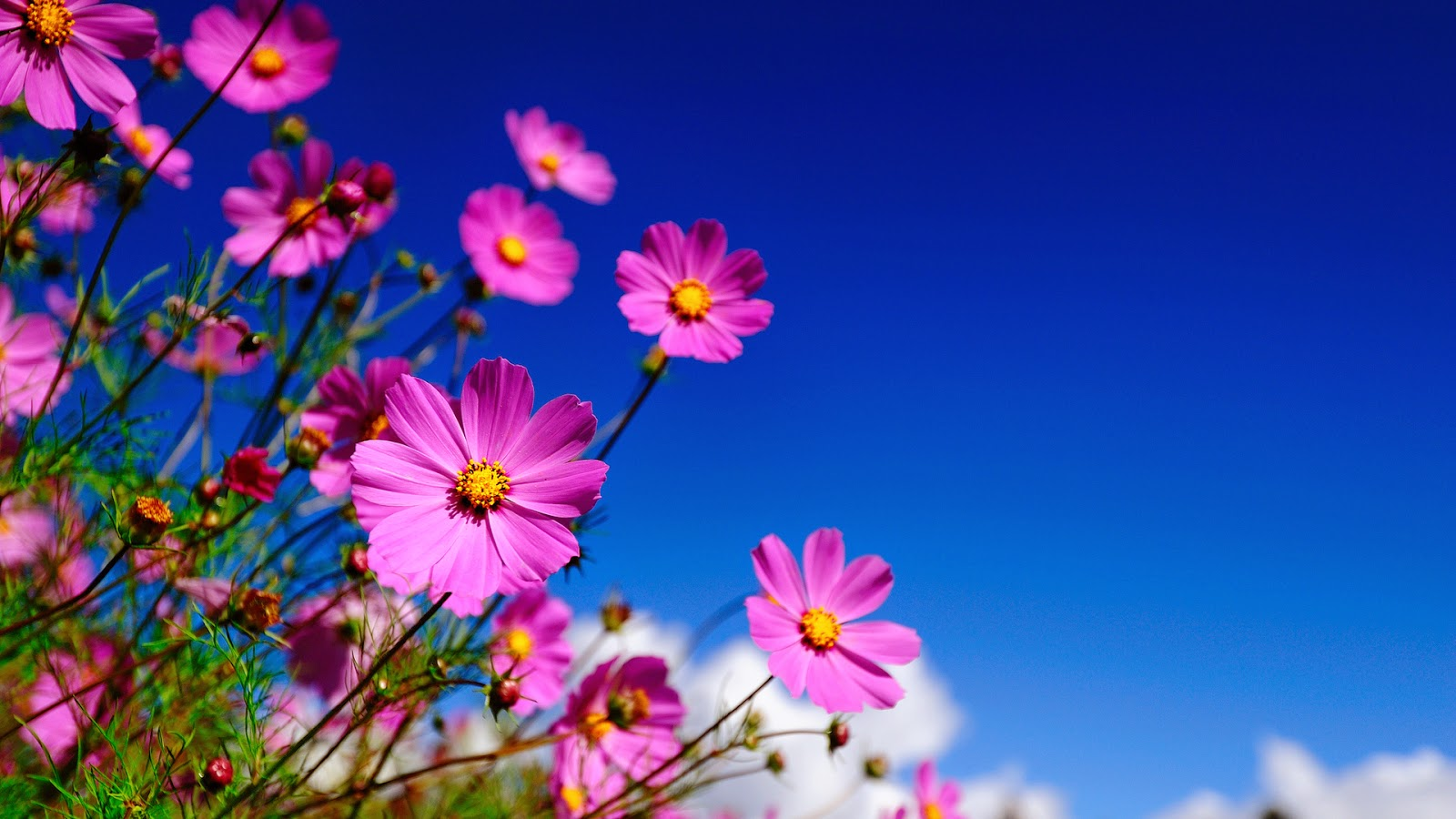 7 Nice Flowers Wallpaper Desktop Background Full Screen 1600x900