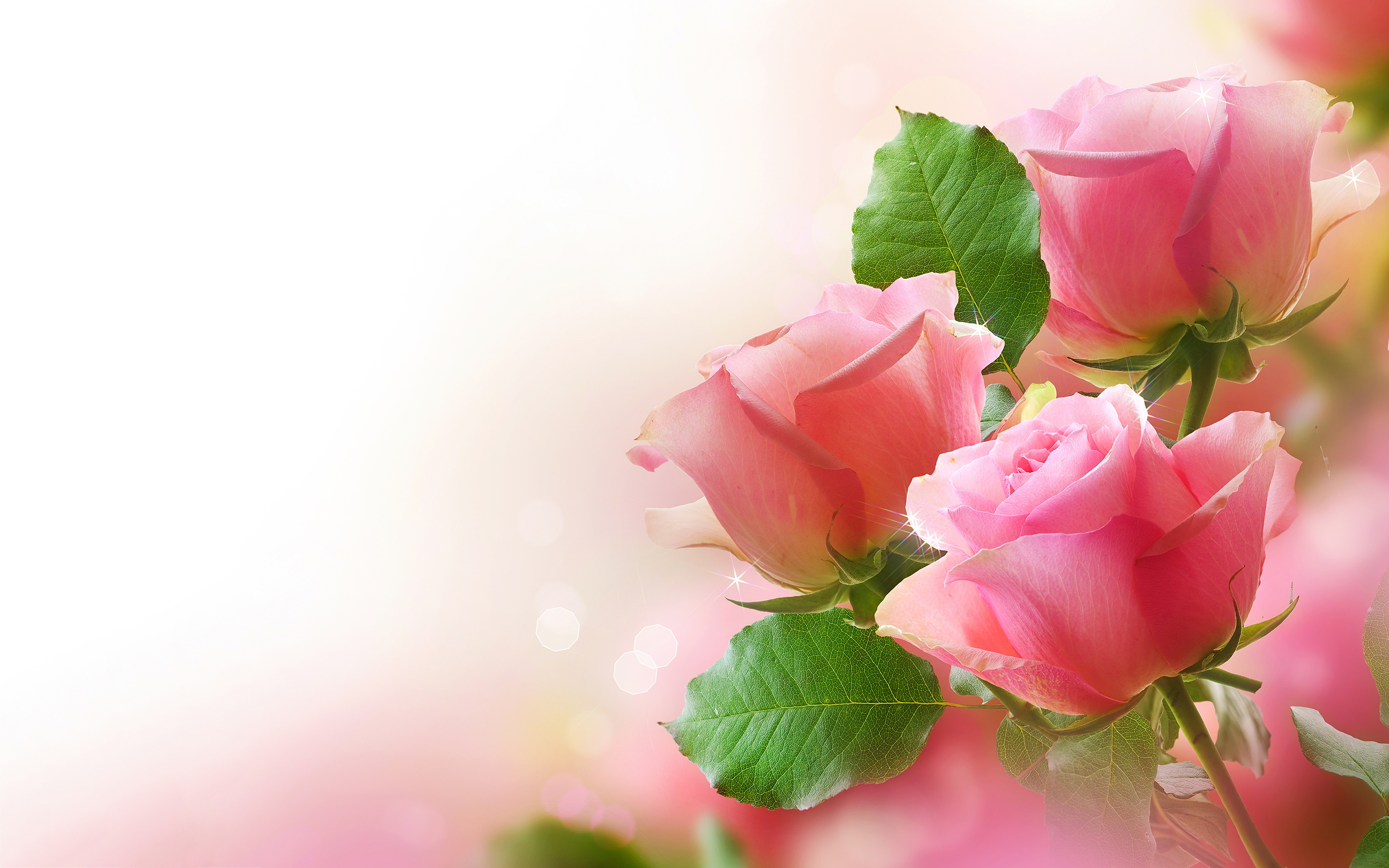 File Name Cute Pink Roses Wallpaper Full HD 2880x1800