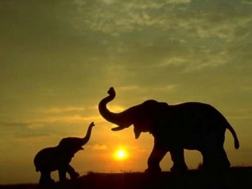 beautiful wallpaper that shows a Mother Elephant playing with her baby 500x375