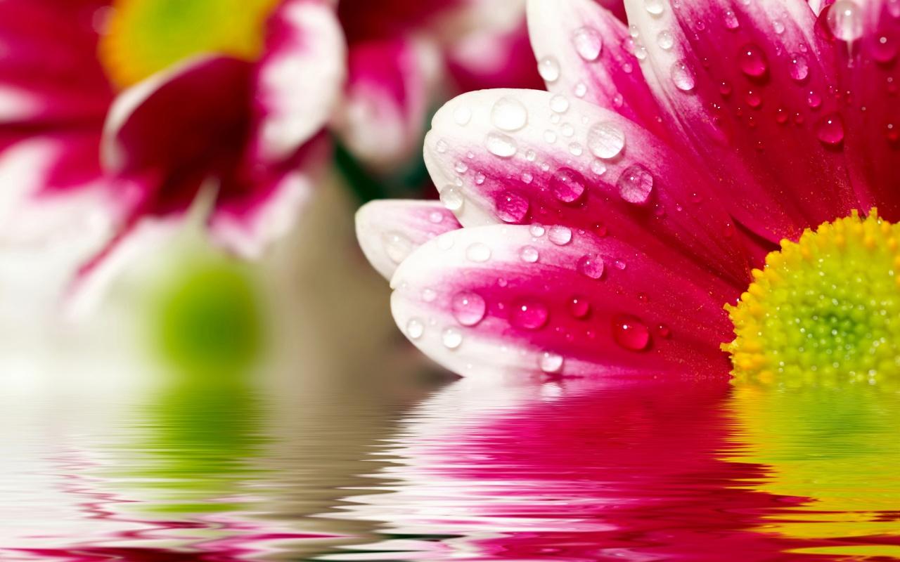 Digital High Defination 3D HD Flower Wallpapers 1080p 1280x800
