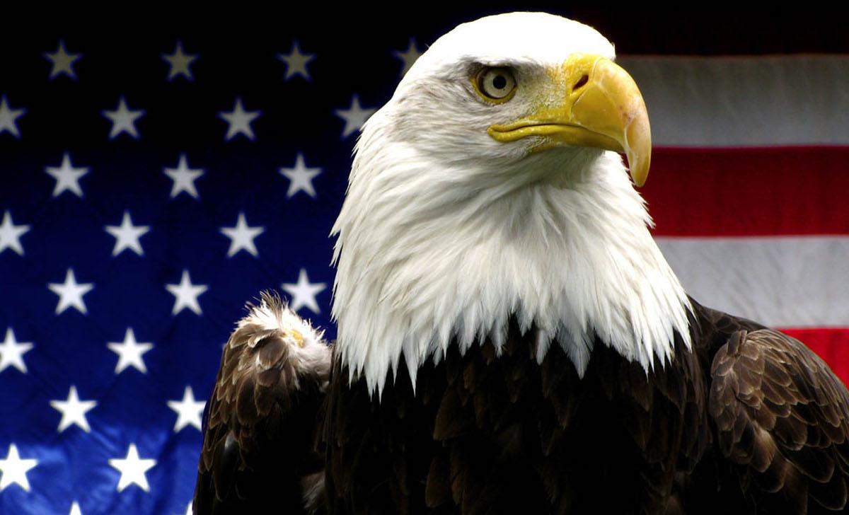 FileAmerican Bald Eaglejpg   Wikipedia the encyclopedia 1200x728