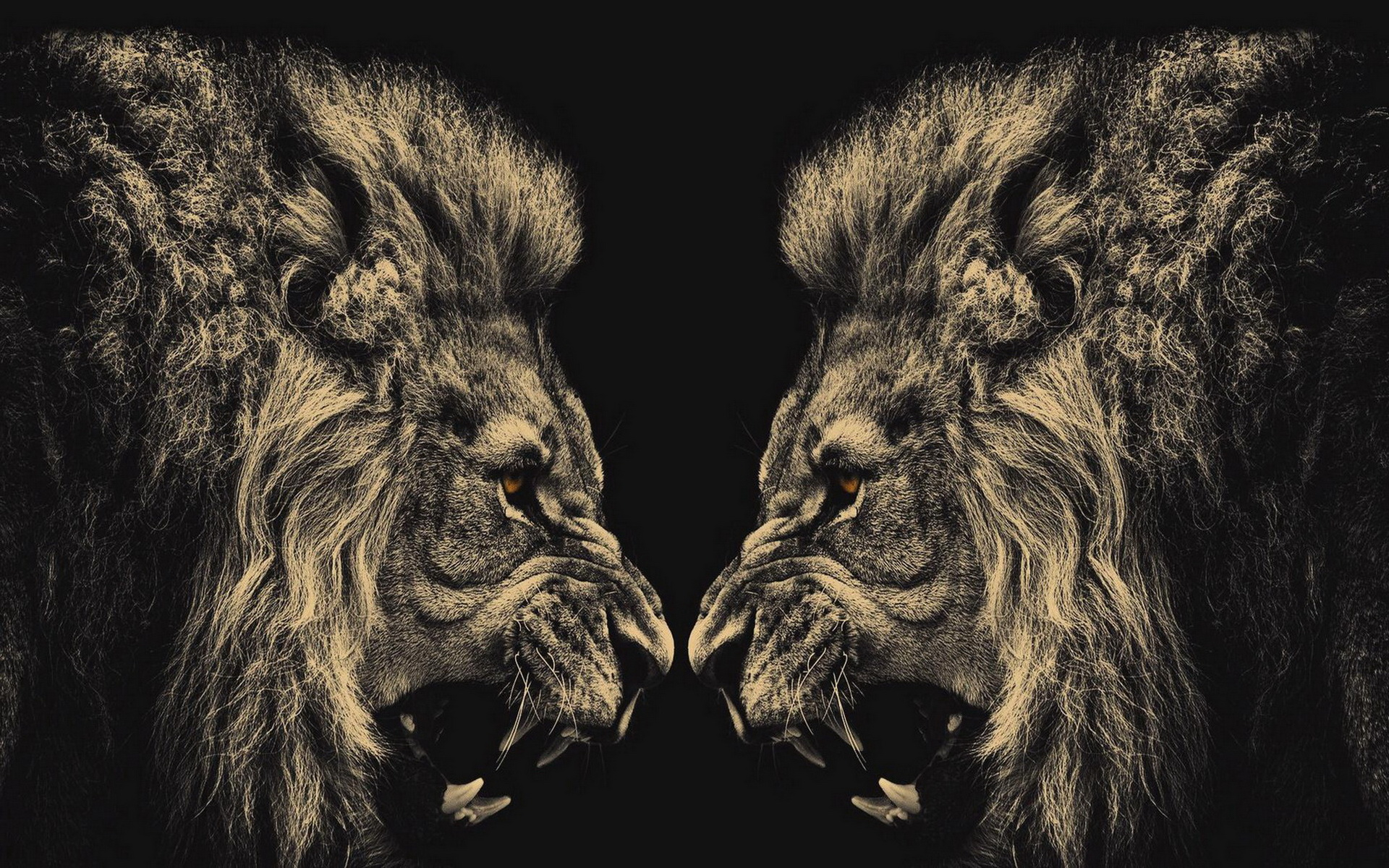 Lion Wallpaper Screensaver HD 10259 Wallpaper Cool Walldiskpaper 1920x1200