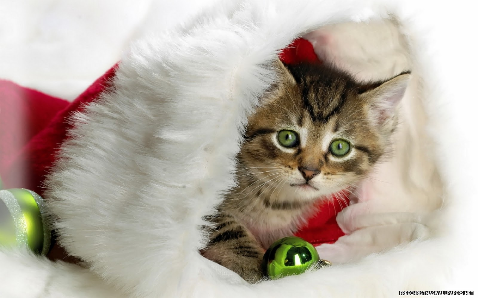 cute christmas wallpapers Amazing Wallpapers 1600x1000