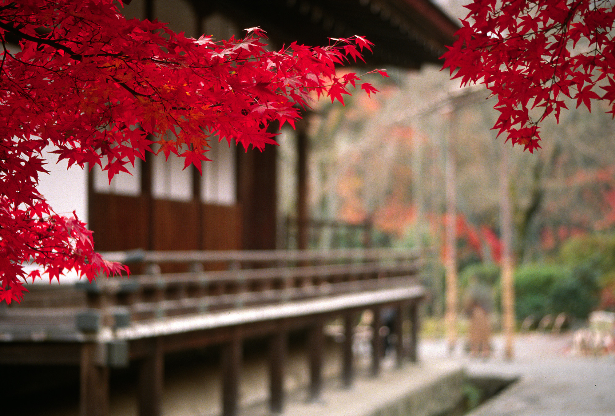 Japan Wallpapers and Images Japanese Temple Scenery Wallpapers 2000x1353