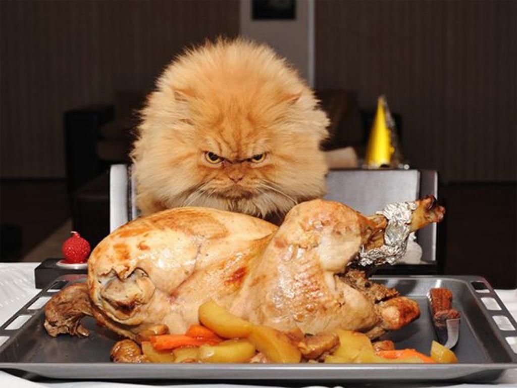 Funny Thanksgiving Desktop Backgrounds wallpaper Funny Thanksgiving 1024x768