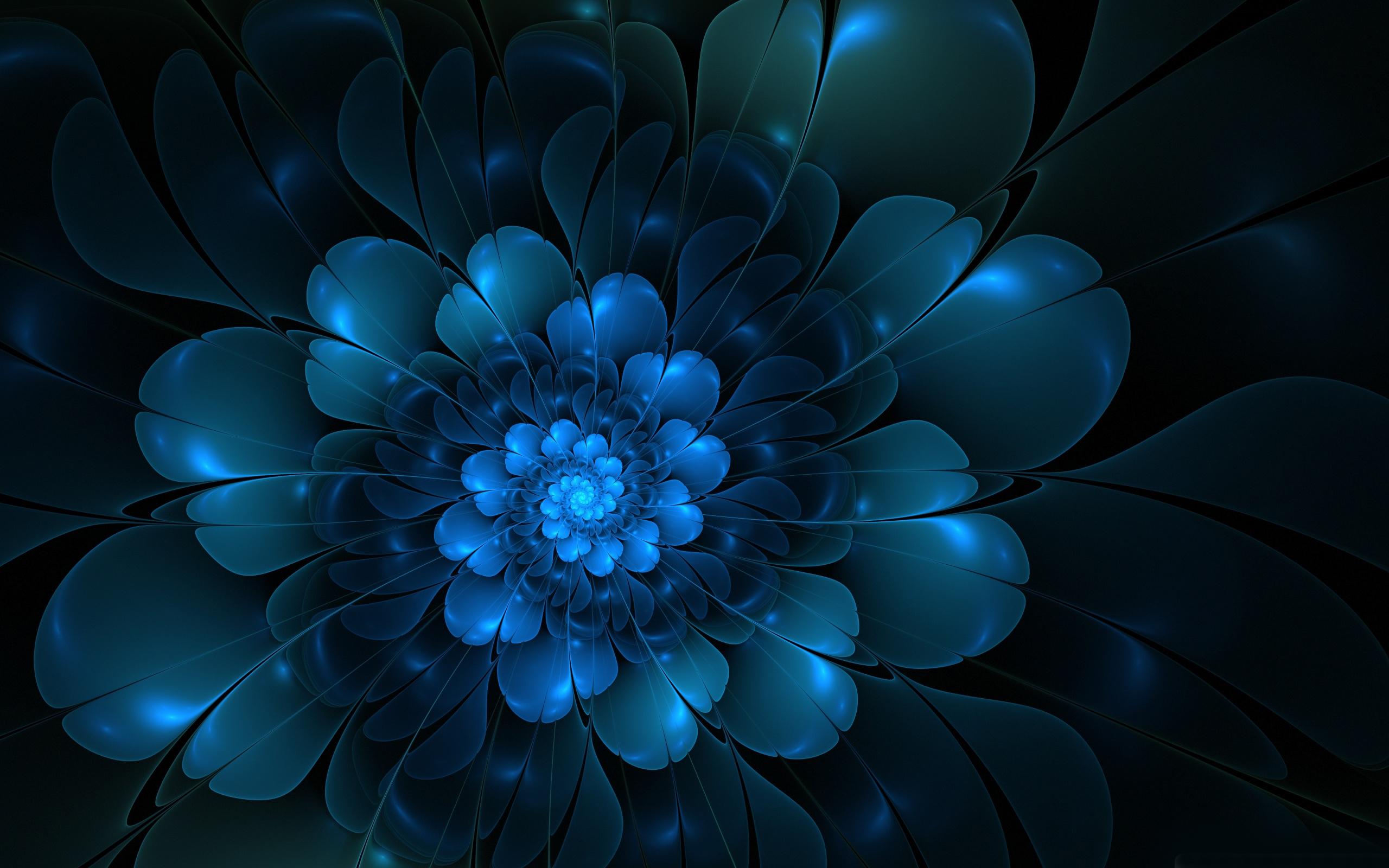 Blue Flower Dark background Creative Wallpaper Flowers Wallpaper 2560x1600