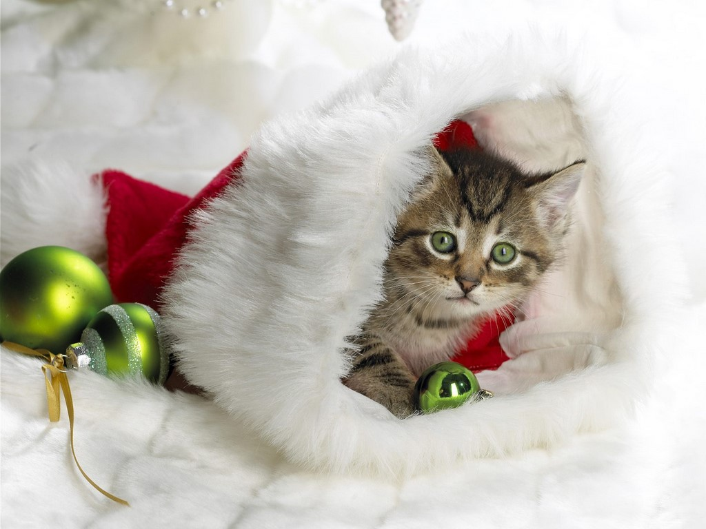 Cute Kitten Santas Little Helper 1024x768