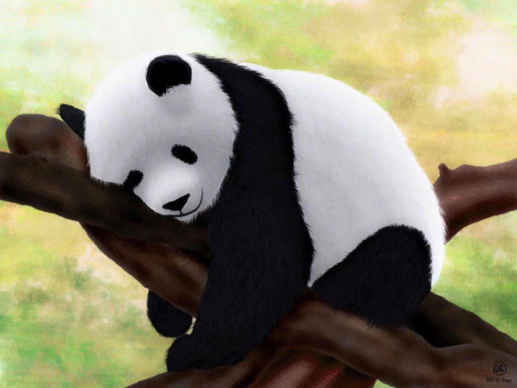 Free Download Baby Panda Wallpapers 1024x768 For Your Desktop Mobile Tablet Explore 71 Baby Panda Wallpapers Panda Bear Wallpaper Panda Hd Wallpaper Cute Baby Panda Wallpaper