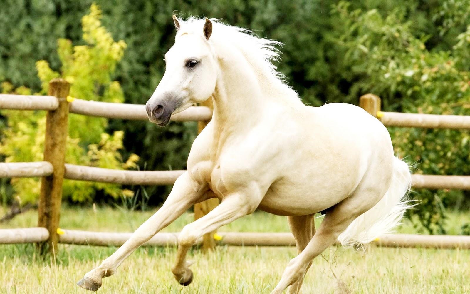 Hd Horse Wallpapers Wallpapersafari