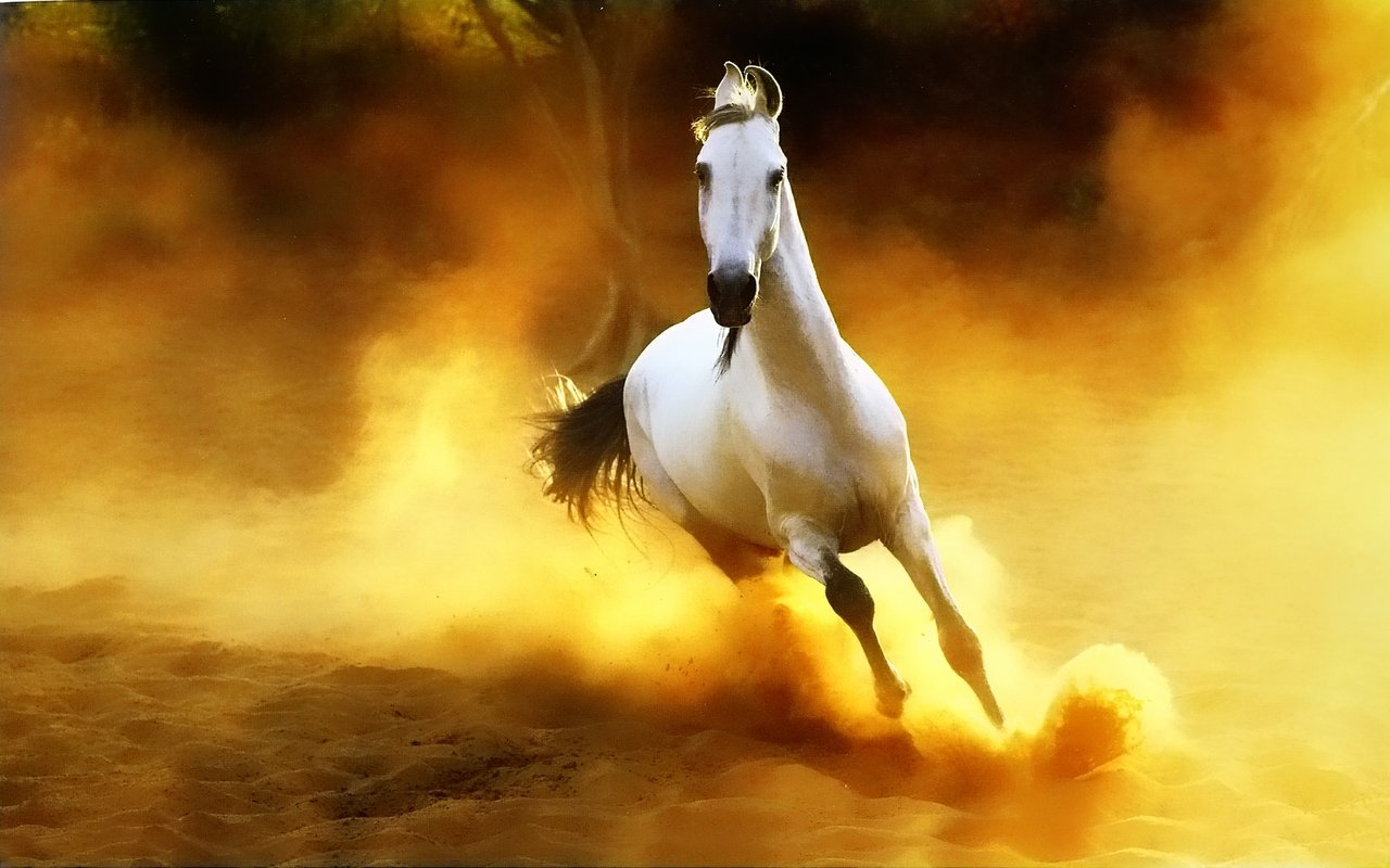 Beautiful Wallpapers wild horses wallpapers 1280x800