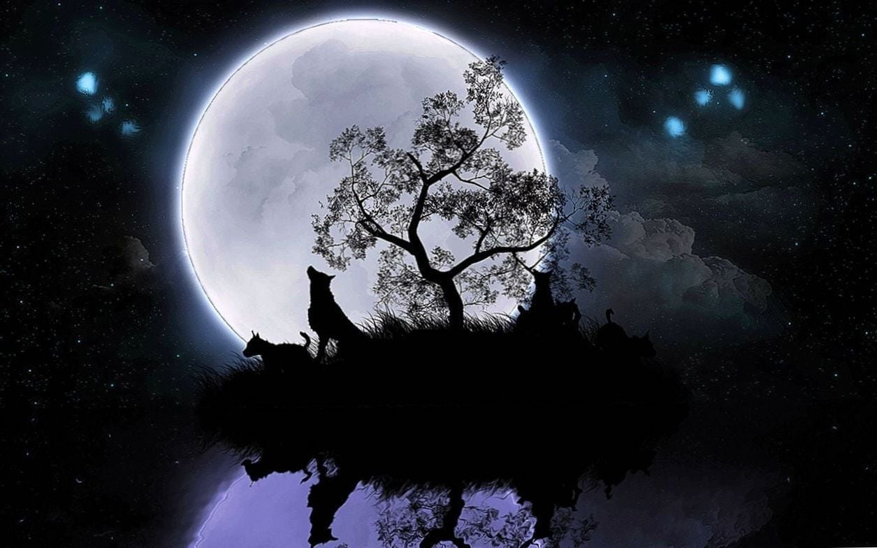Wolf Wallpapers Moon   Wolf WallpapersPro 1255x784