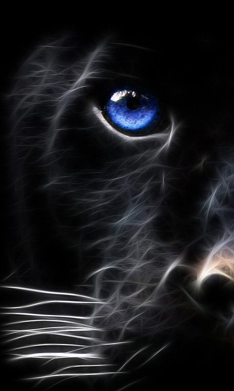 black tiger mobile phone wallpaper 480x800
