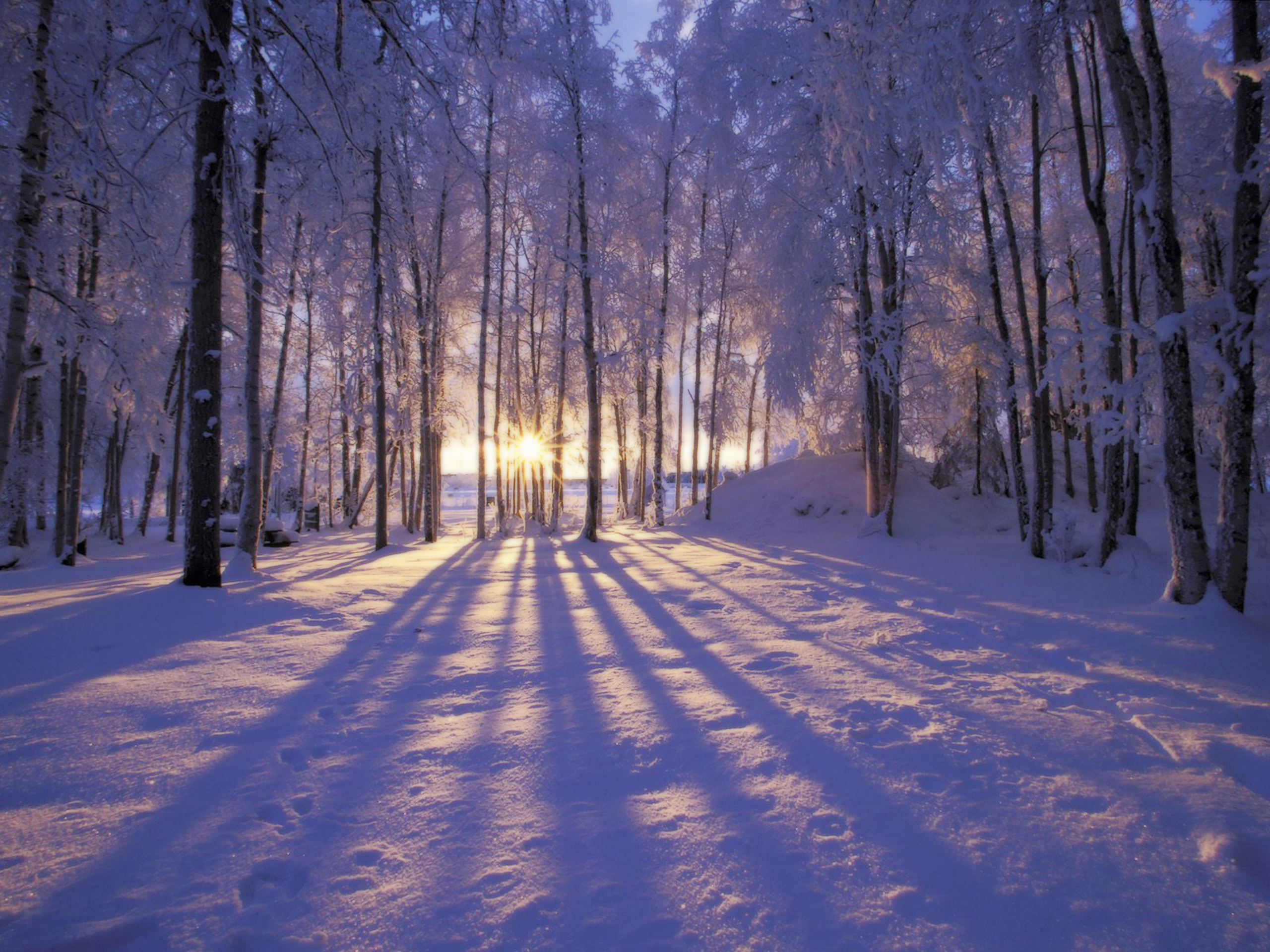 URL httpwwwsmscscomphotowinter scene desktop wallpaperhtml 2560x1920