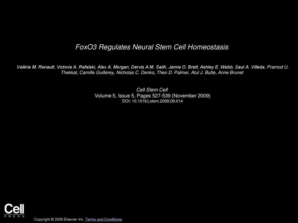 FoxO3 Regulates Neural Stem Cell Homeostasis   ppt download 1024x768
